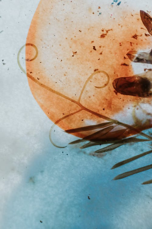 H2O, 곤충, 관념적인의 무료 스톡 사진