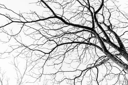 ağaç, doğa, doku, siyah beyaz içeren Ücretsiz stok fotoğraf