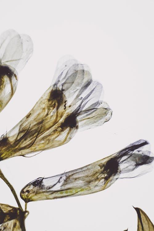 건강, 건강한, 곤충의 무료 스톡 사진