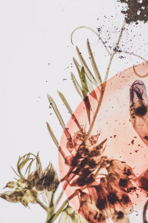 건조한, 관념적인, 꽃의 무료 스톡 사진