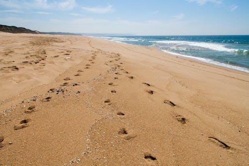 걷고 있는, 구름, 모래, 바다의 무료 스톡 사진