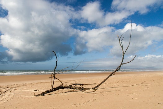 Black Tree Branch on Seashore Under White Clouds