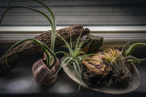 シェル, 少し, 成長, 植物の無料の写真素材