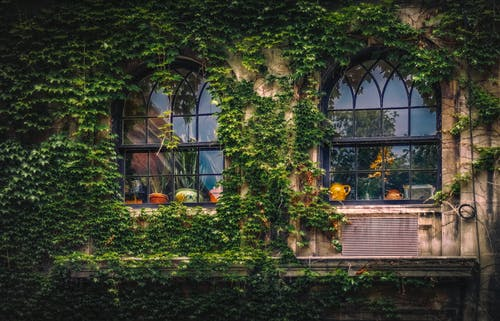 Ảnh lưu trữ miễn phí về ánh sáng ban ngày, các cửa sổ, cây thường xuân, kiến trúc