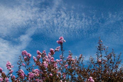 Бесплатное стоковое фото с голубое небо, дневной свет, заводы, небо
