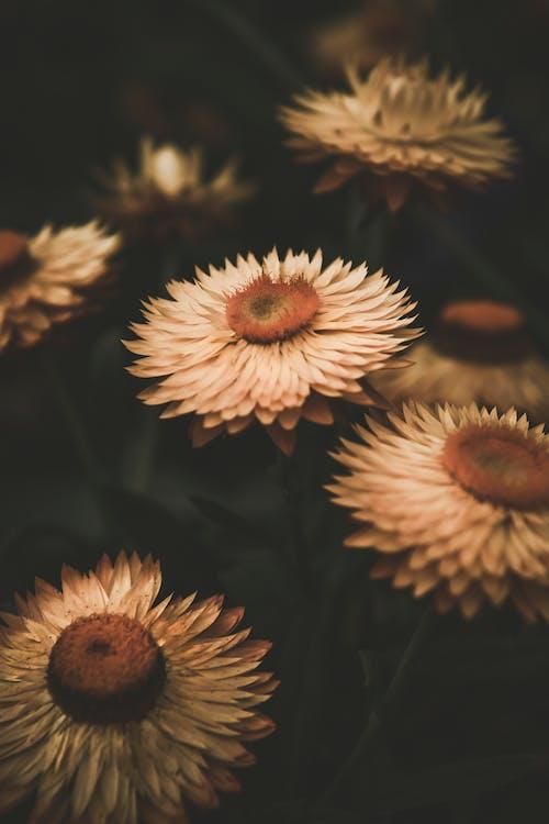 açık hava, bitki örtüsü, Biyoloji içeren Ücretsiz stok fotoğraf