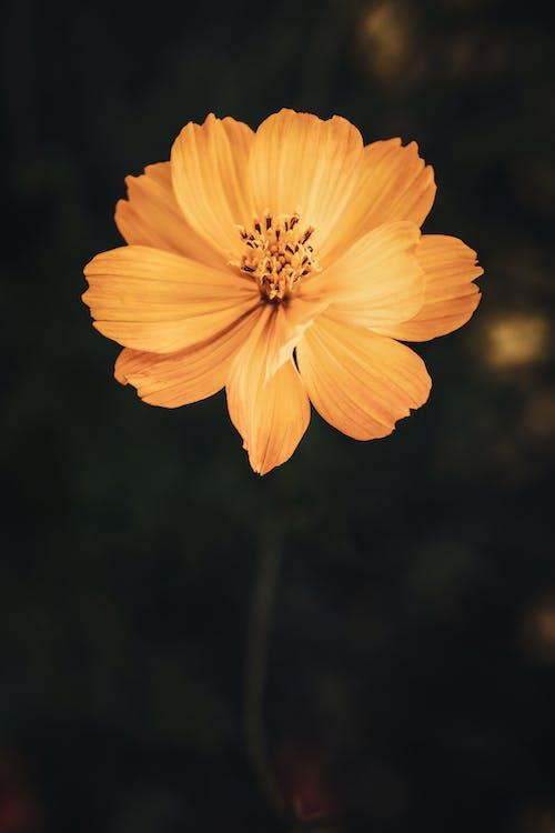 açık hava, Bahçe, bitki örtüsü içeren Ücretsiz stok fotoğraf