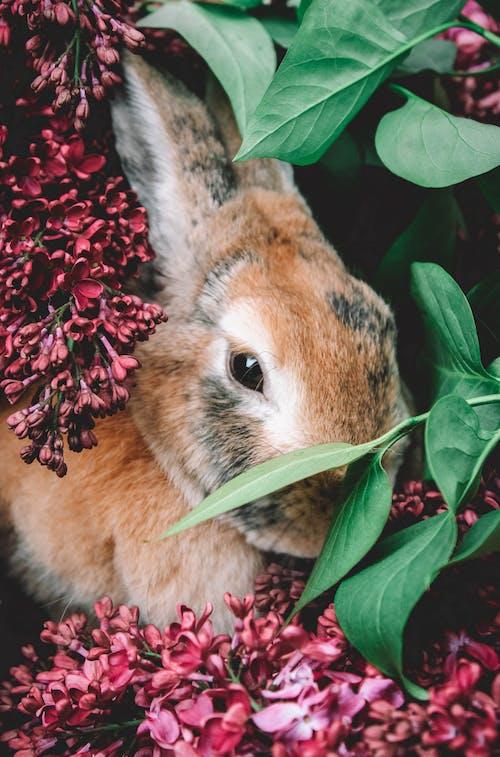 Δωρεάν στοκ φωτογραφιών με άγρια φύση, άγριος, άνοιξη