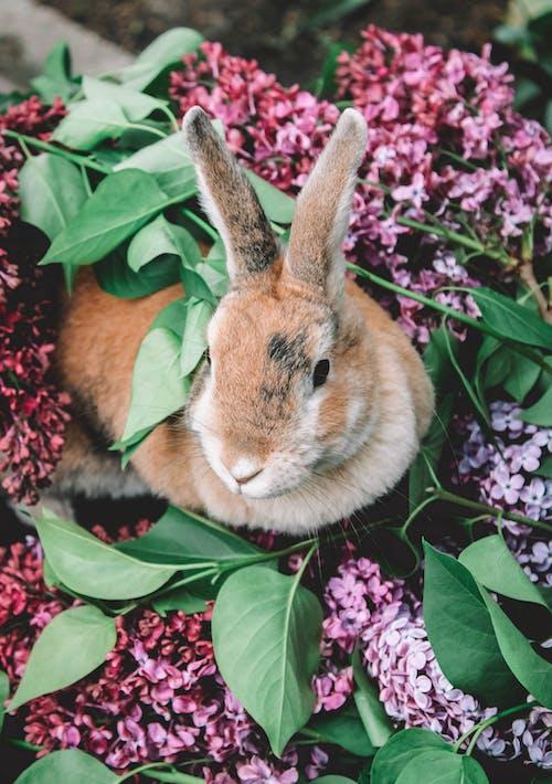 Kostnadsfri bild av blommor, däggdjur, djur