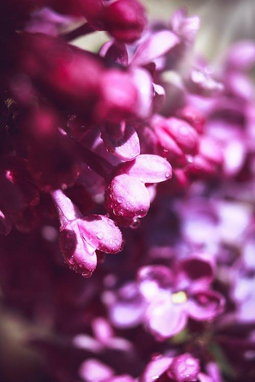 Ilmainen kuvapankkikuva tunnisteilla jousi, kaunis luonto, kevään tausta