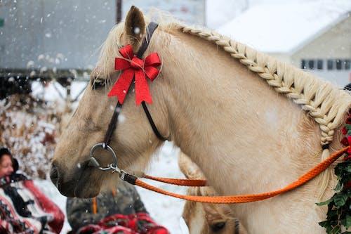 Základová fotografie zdarma na téma barva, dekorace, kůň, lano
