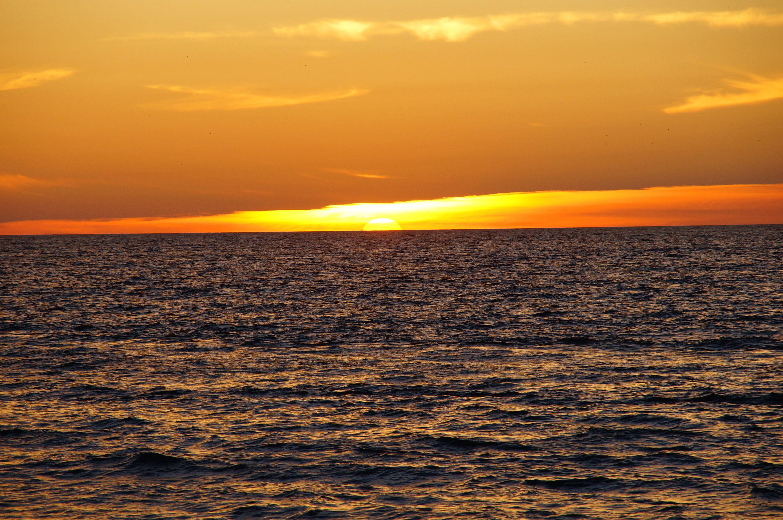 天性, 天空, 招手, 日落 的 免费素材照片