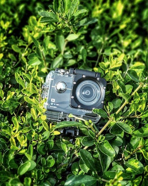 คลังภาพถ่ายฟรี ของ กลางวัน, กล้อง, การเจริญเติบโต, สิ่งแวดล้อม