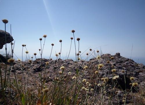 Foto stok gratis alam, bebatuan, biru, bunga liar