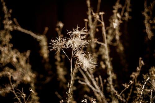 Free stock photo of macro, wild flower, wild flowers