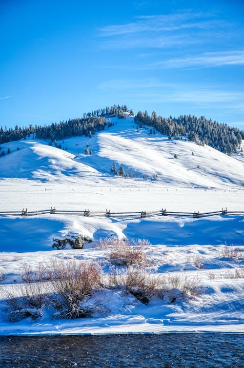 冬季, 冰, 冷 的 免費圖庫相片