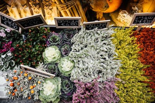 Kostenloses Stock Foto zu blühen, blumen, botanisch