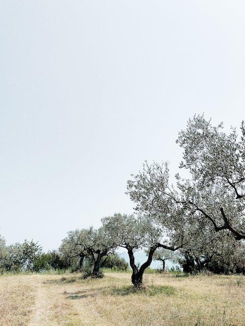 Foto profissional grátis de árvores, caminho, campina