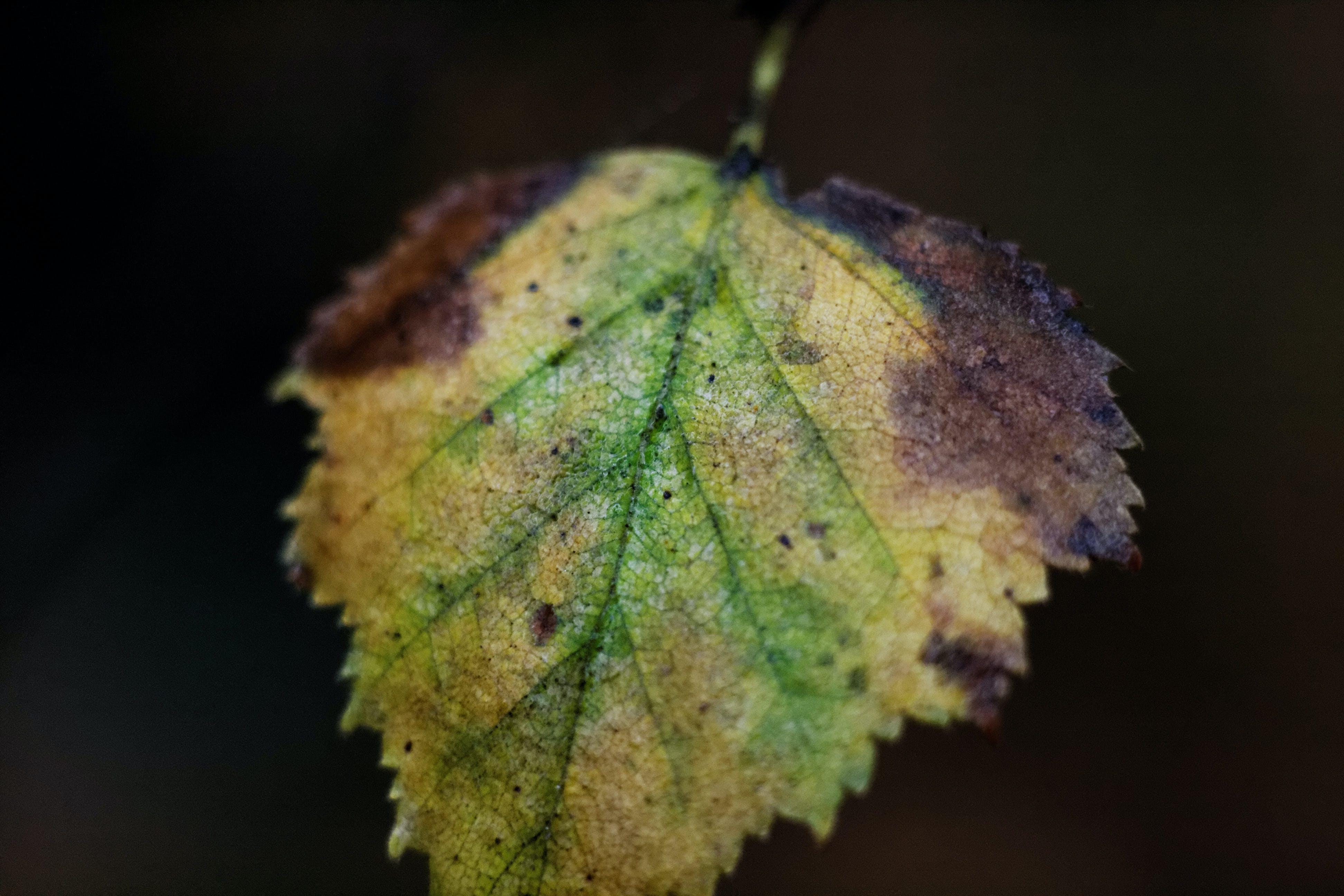 Free stock photo of leaf, theme autumn