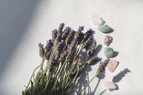 Foto stok gratis batu, bebatuan, bunga lavender