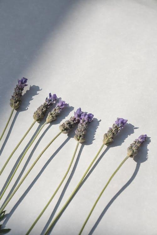 Foto profissional grátis de aroma, caules, cheiro
