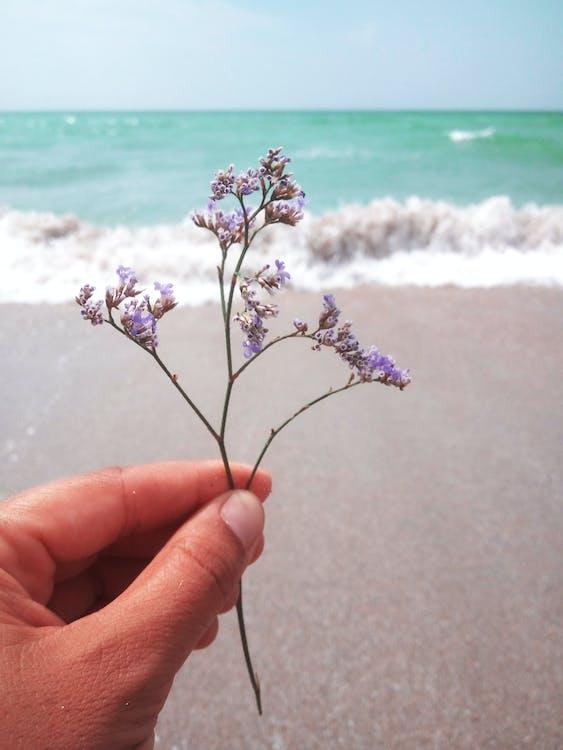 beach, flowers, hand