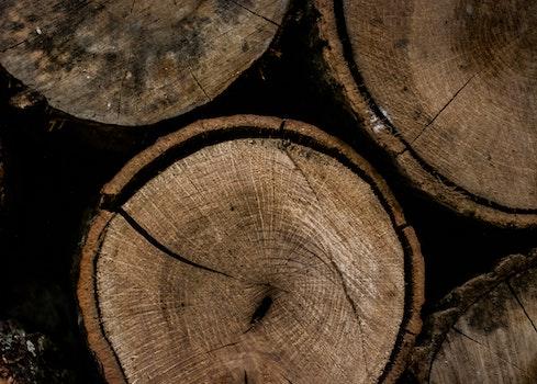 Round Brown Wooden Slab