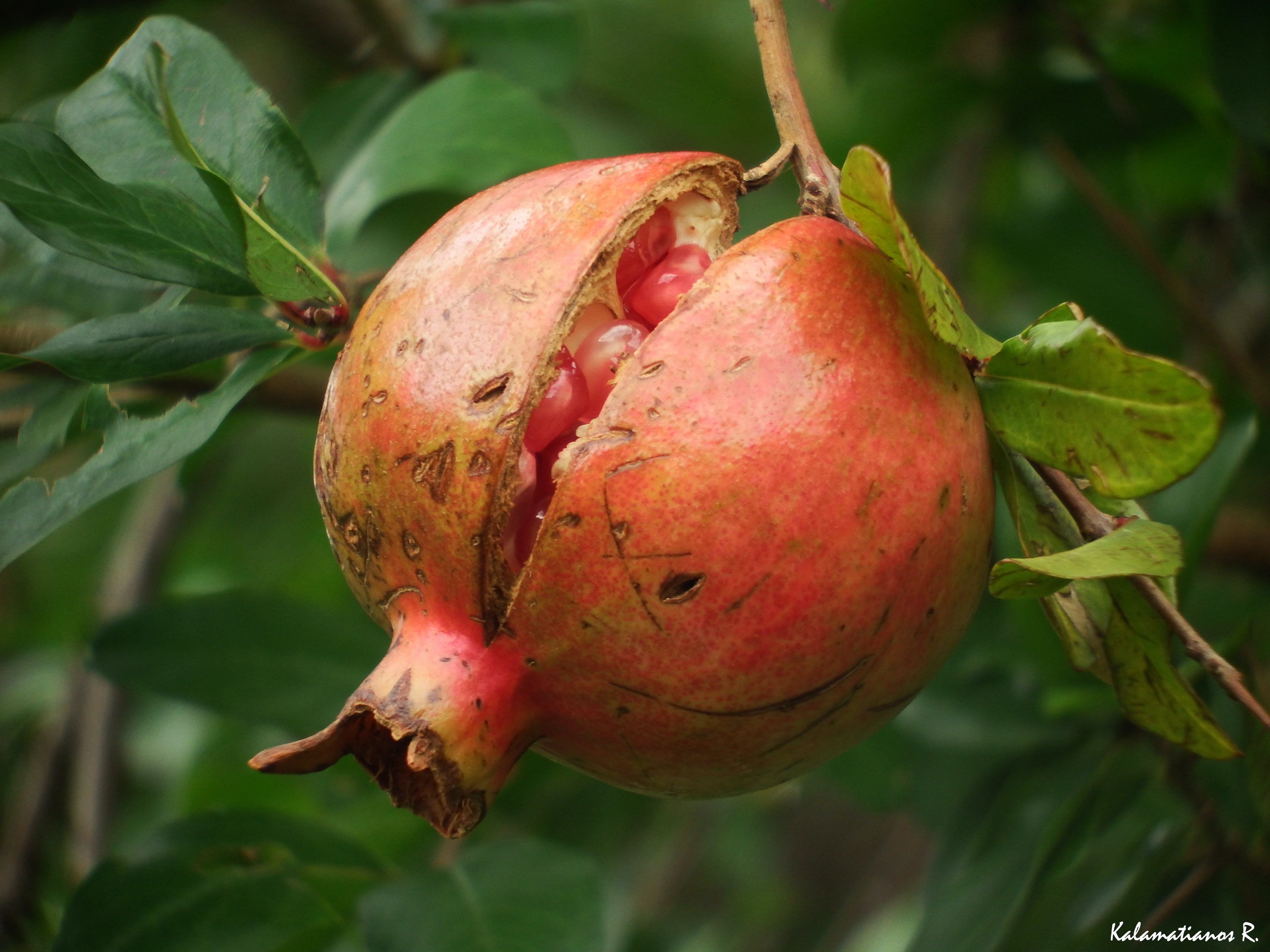 Free stock photo of nature, seeds, macro, fruit