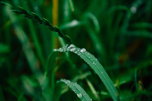 Free stock photo of grass, dew, green, drop