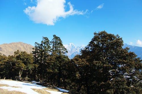 Foto d'estoc gratuïta de arbre, cel, cel blau, fons