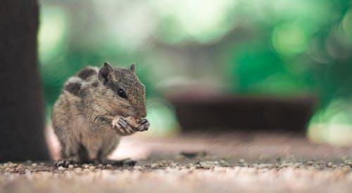 Ilmainen kuvapankkikuva tunnisteilla eläimet, kasvit, luonto, makro