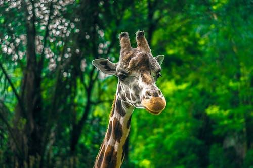 Gratis lagerfoto af dagslys, dyr, dyrefotografering