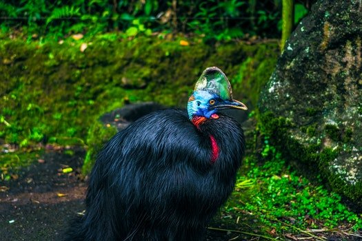 Black Feathered Bird Beside Mossy Stone