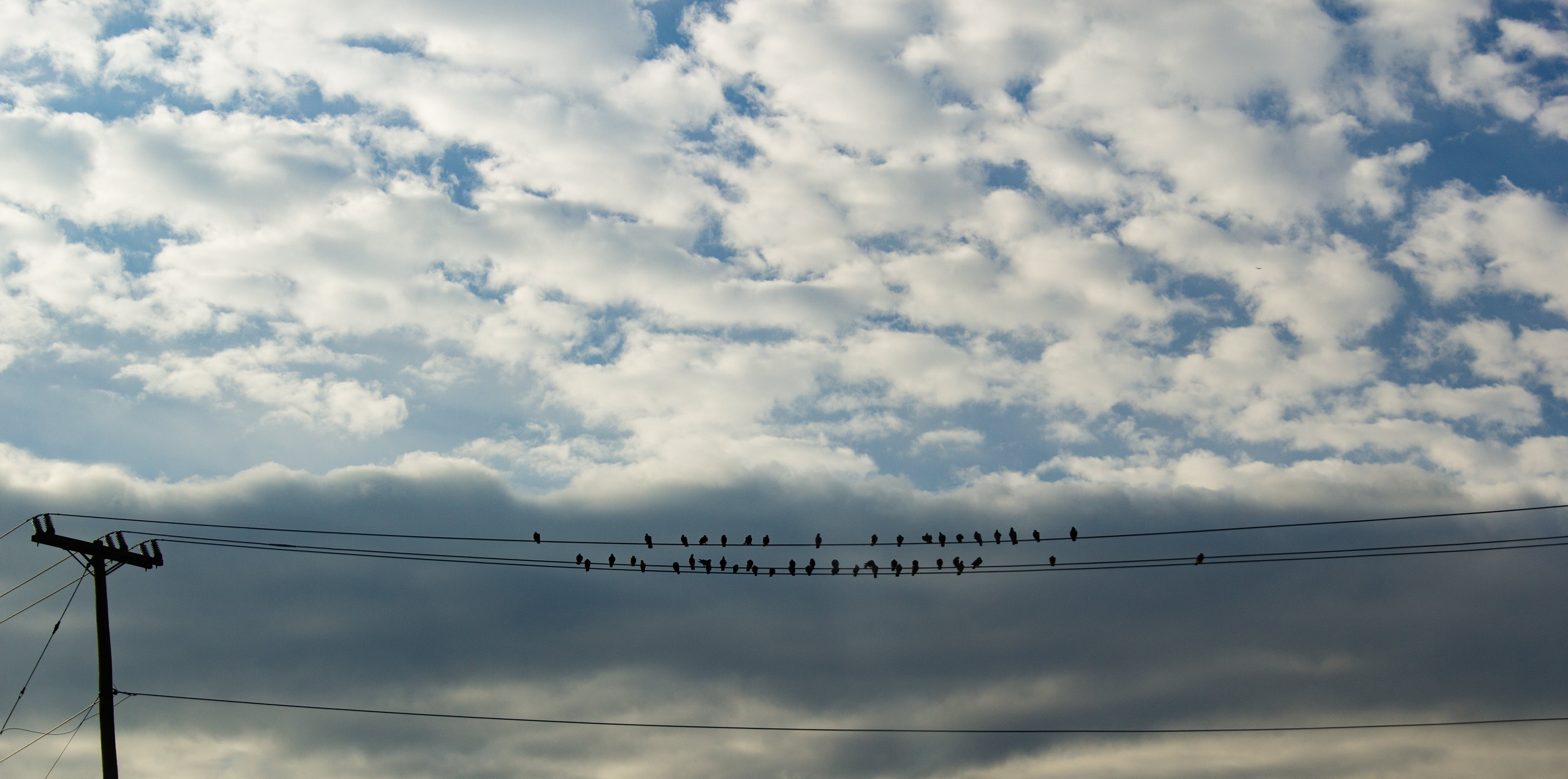 Free stock photo of clouds, fall, birds