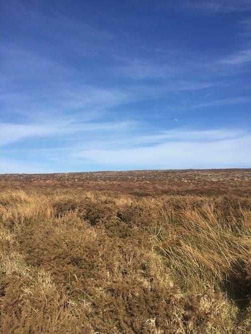 Free stock photo of blue sky, landscape