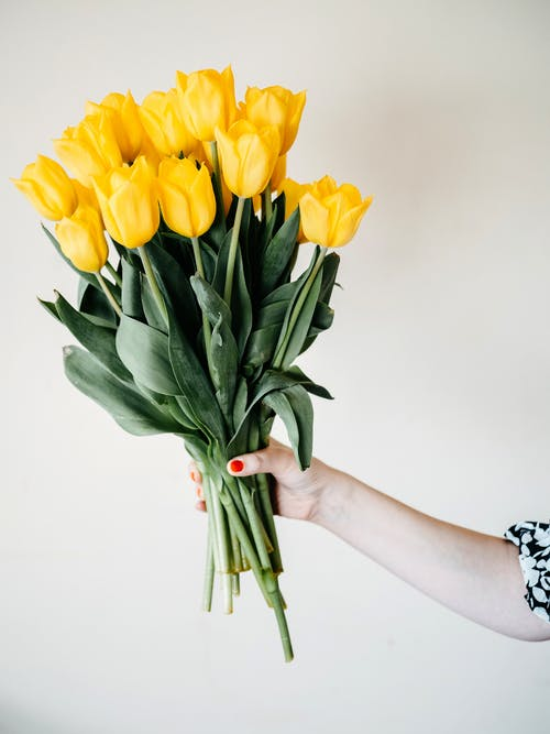 Yellow Tulips Bouquet on Persons Hand