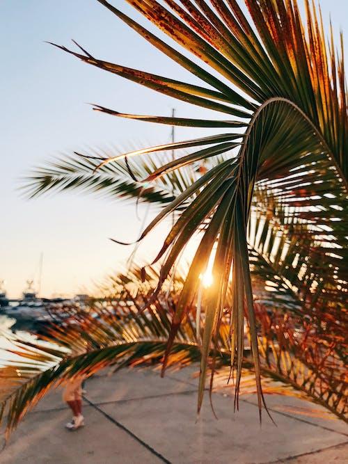 Photos gratuites de arbre, baie, beau coucher de soleil
