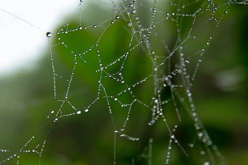 คลังภาพถ่ายฟรี ของ กลางแจ้ง, ตาข่าย, ธรรมชาติ, น้ำ