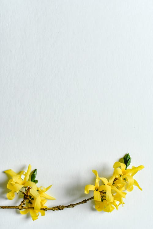 Yellow Flowers on White Surface