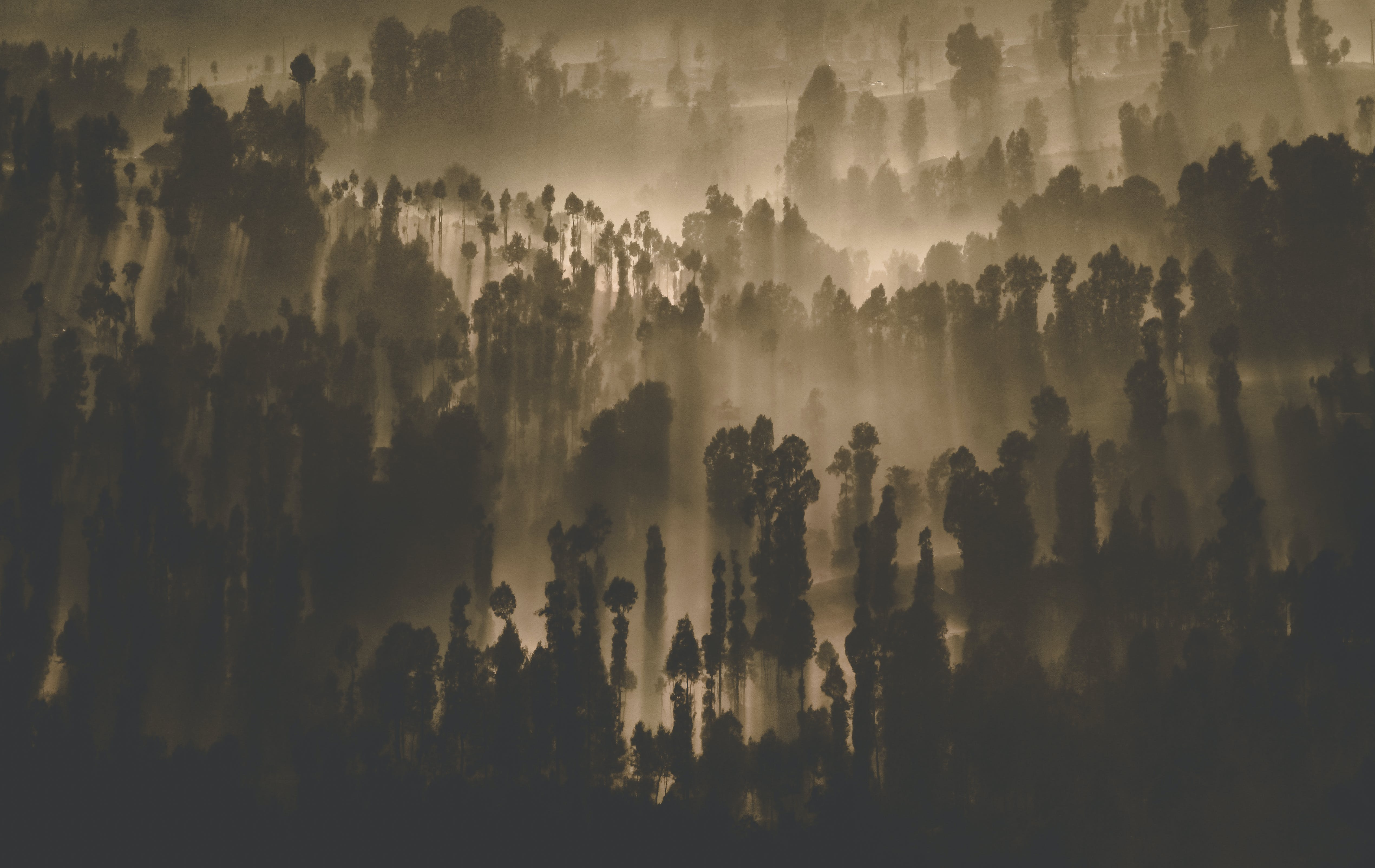 Silhouette Photography of Forest