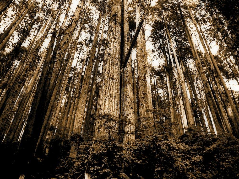 aboiement, arbres, art