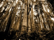 Sepia Photo of Forest