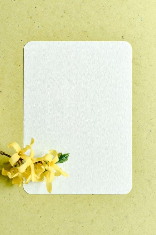 White and Yellow Flower on White Rectangular Board