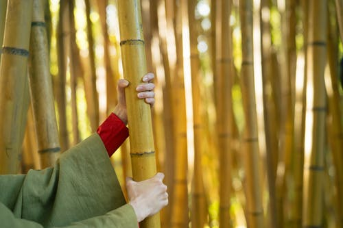 Photos gratuites de amour, art, bambous