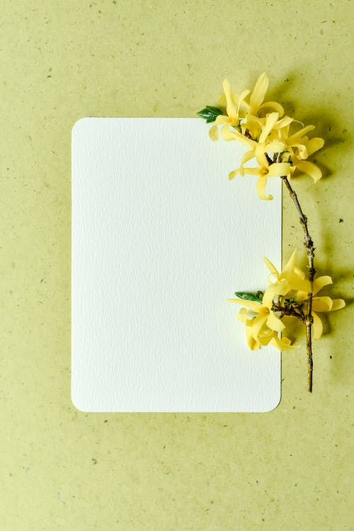 White and Yellow Flower on White Paper