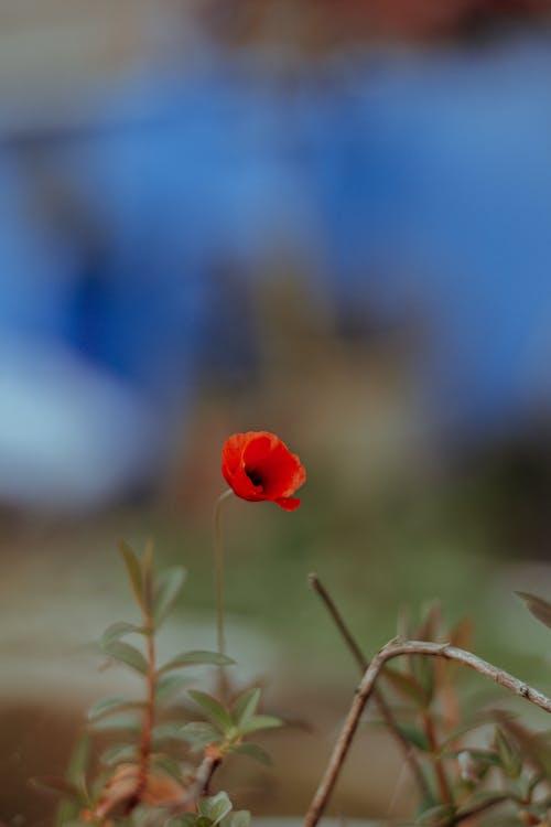 Immagine gratuita di armonia, aroma, aromatico