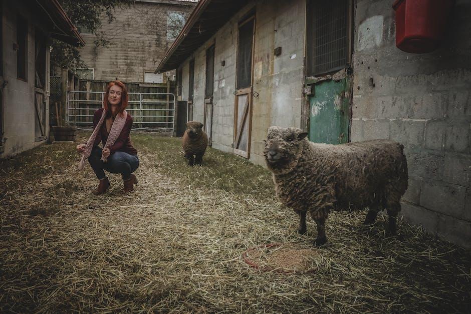 Woman doing squat near the gray sheep