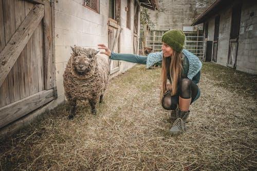 Základová fotografie zdarma na téma denní světlo, farma, holka, hospodářská zvířata