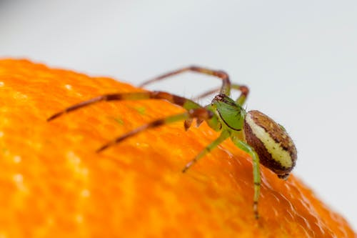 Macro Shot of a Green Crab Spider on an Orange Surface