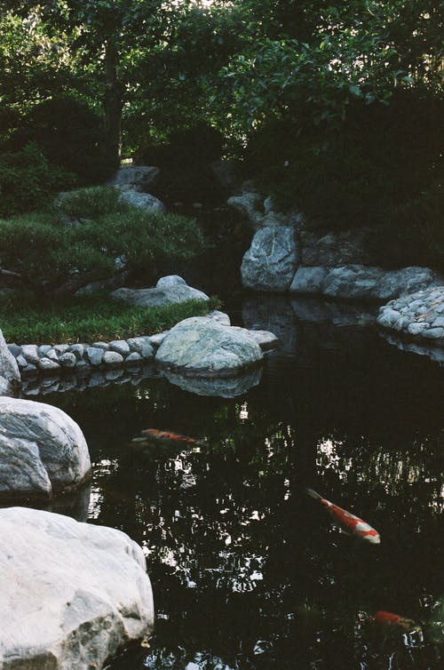 Základová fotografie zdarma na téma bazén, cestování, denní světlo